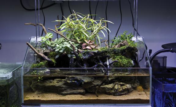 可养鱼的山水盆景图片