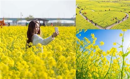 3至6月油菜花盛放│4個韓國油菜花田打卡熱點