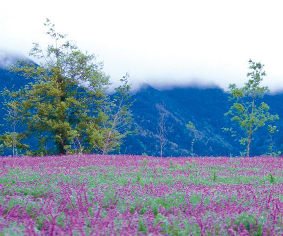 在春回大地的日子,台灣陽明山上繁花盛開,景色優美。