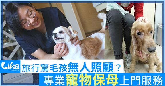 寵物保母上門服務 專業照料外遊無憂