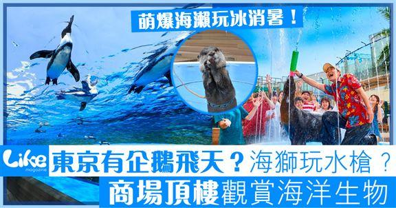 東京商場頂樓企鵝飛天!         暑假海獅同你玩水戰