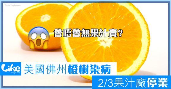 美國佛州橙樹染病                2/3果汁廠停業