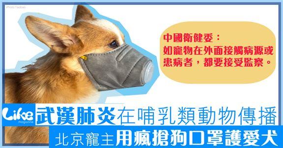 武漢肺炎喺哺乳類動物傳播│北京寵主瘋搶狗口罩護狗