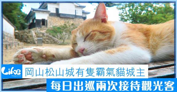 岡山松山城有隻霸氣貓城主│每日出巡兩次接待觀光客