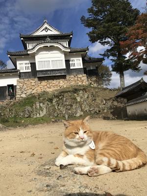 十三郎是松山城的城主。