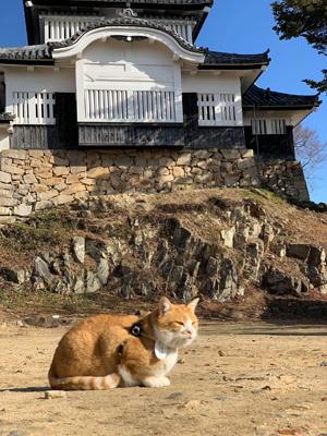 來自各地的貓奴專程到訪,與十三郎會面、打卡。