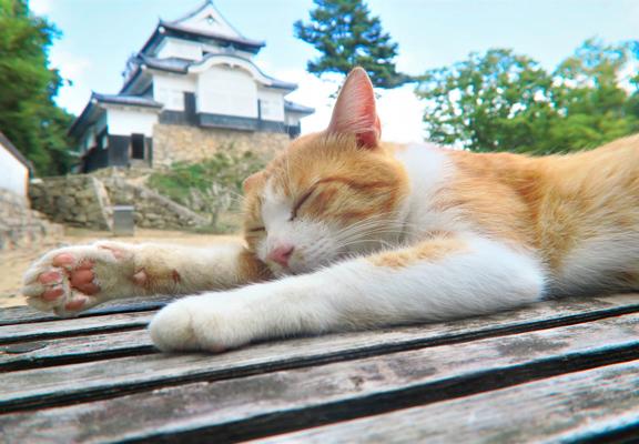 十三郎在城內的長椅賴著休息時,樣子十分可愛,迷倒很多貓奴。