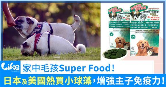 家中毛孩Super Food  - 小球藻!日本及美國熱買中,增強主子免疫力!