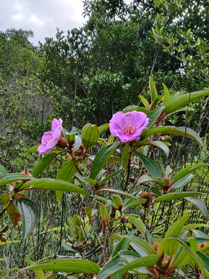 山野林間,經常可見美麗的野花。但記著不要亂採,破壞生態。
