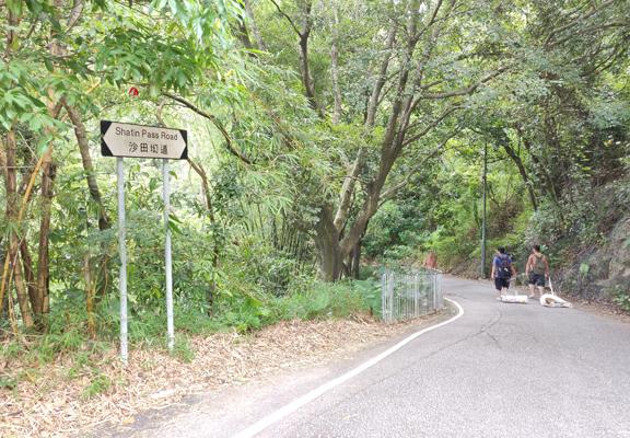 沙田坳道很陡斜,走上去不輕易。