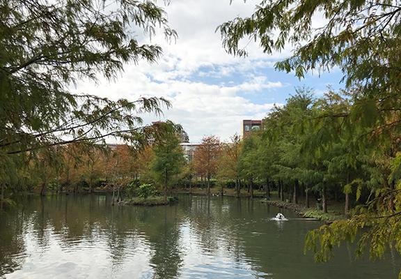 民宿房子旁有個人工湖,是老闆自己買機器自己挖出來的。湖的四周種了很多落雨松,營造出歐洲度假區的感覺。湖內養殖了鴨子、白鵝等,風景優美。
