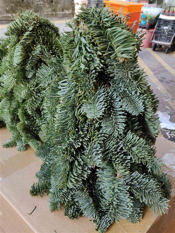 旺角花墟選購聖誕盆栽│自選素材DIY聖誕樹及花環