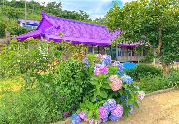 6月時份來到,可以欣賞到紫紫藍藍嘅繡球花。