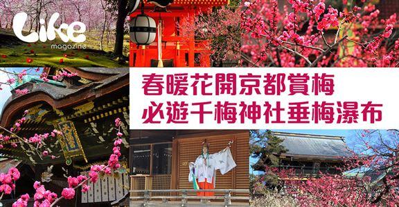 春暖花開京都賞梅│必遊千梅神社垂梅瀑布