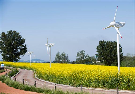 京畿道農協安城牧場可賞花又可接觸動物,係一個家庭旅遊熱點。
