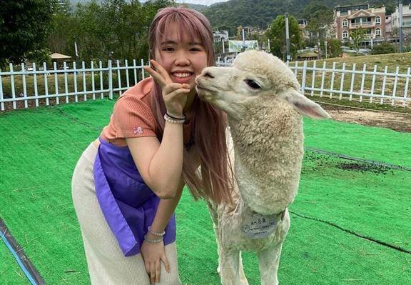 被小羊駝偷吻,感覺很幸福啊!