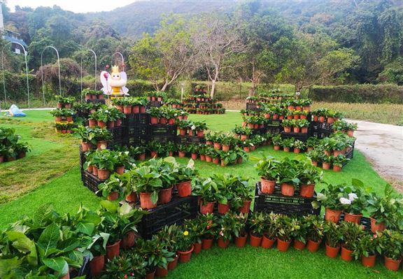 農莊按不同時節種植不同花草。