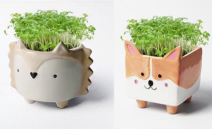 3種款式動物造型盆栽:意大利靈緹犬、哥基及小刺蝟,可愛爆登,等著你帶回家。