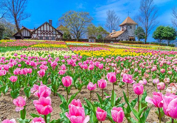公園四季有不同花卉盛開。